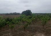 90 cuadras de terreno en venta - ideal agricultura