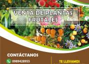 Plantas frutales injertas certificadas