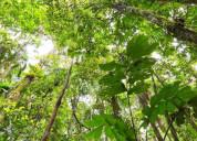 Vendo 5 hectáreas en la provincia de orellana