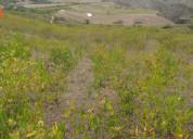 Vendo terreno de 2 hectáreas en ibarra  aloburo