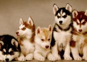 Desearia adoptar un cachorro