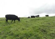 Venta de hacienda en cayambe son 35 hectareas