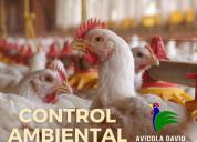 Venta de pollos en pie al por mayor y menor